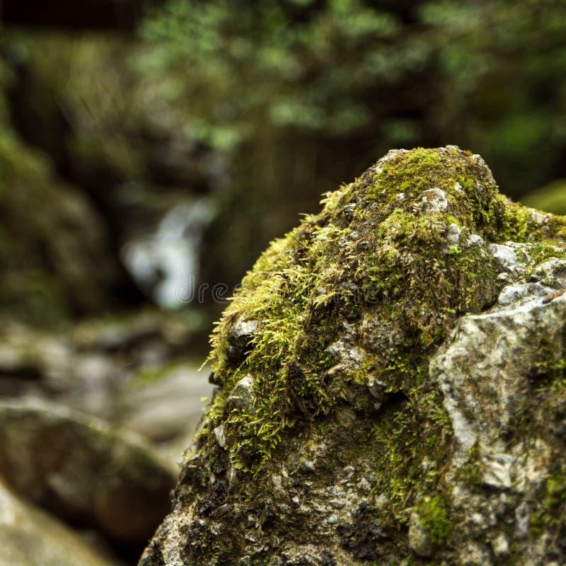 自然接近的看法在Euskadi 免版税库存照片