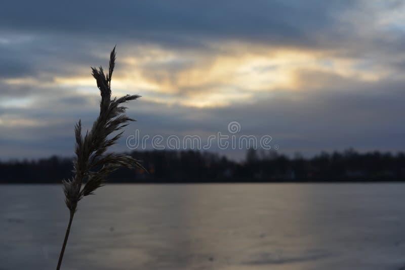 自然摄影在瑞典 图库摄影