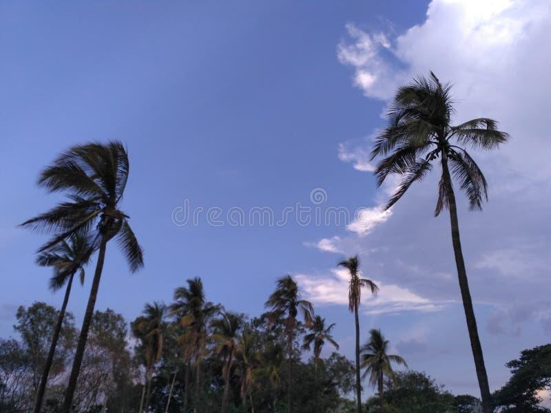 自然摄影浦那,马哈拉施特拉印度 免版税库存照片
