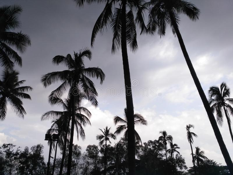 自然摄影浦那,马哈拉施特拉印度 库存图片