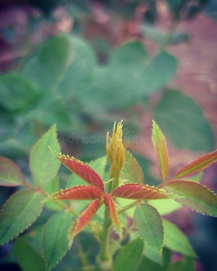 自然摄影 库存照片