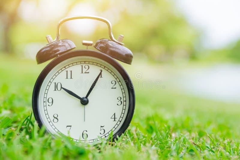 自然时钟室外绿色自然 免版税库存照片