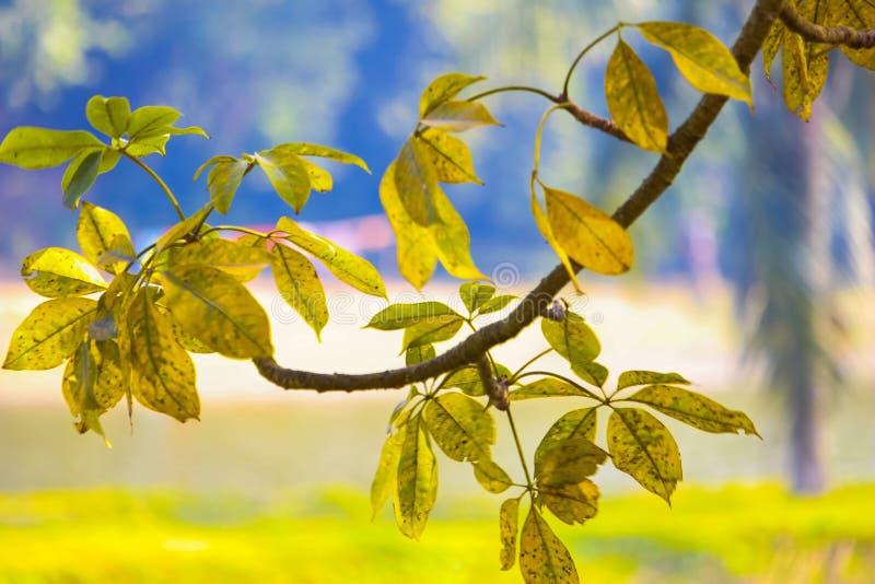 自然春天美丽的叶子在冬天的冬天落 库存照片