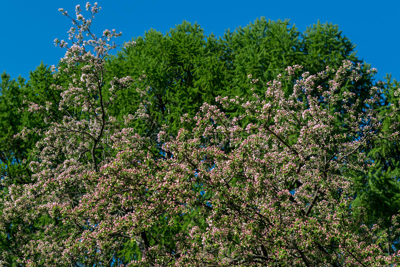 自然春天 库存照片