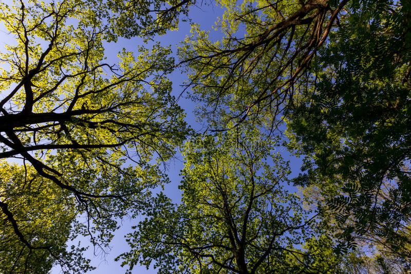 自然春天 免版税图库摄影