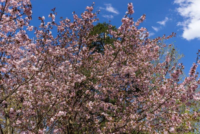 自然春天 免版税库存照片
