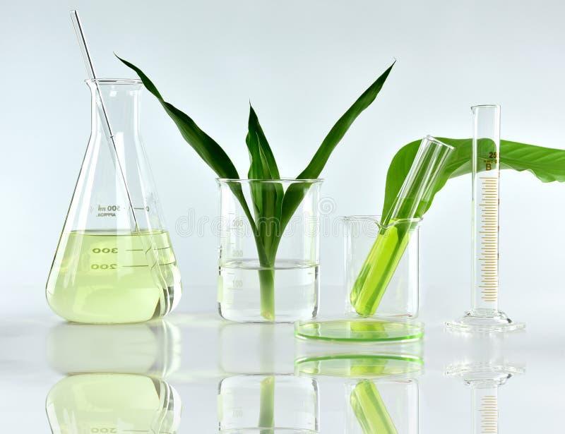 自然有机植物学和科学玻璃器皿,供选择的草本医学,自然护肤美容品 免版税库存照片