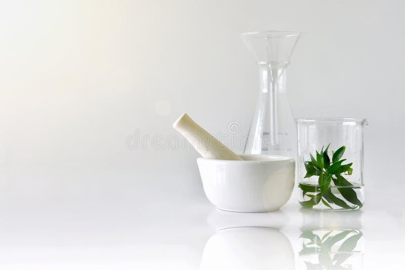 自然有机植物学和科学玻璃器皿,供选择的草本医学,自然护肤美容品 图库摄影