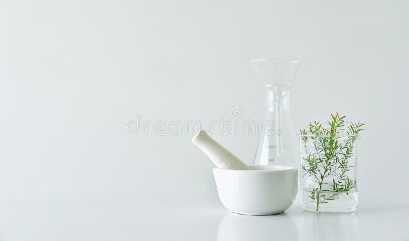 自然有机植物学和科学玻璃器皿,供选择的草本医学,自然护肤美容品 库存照片