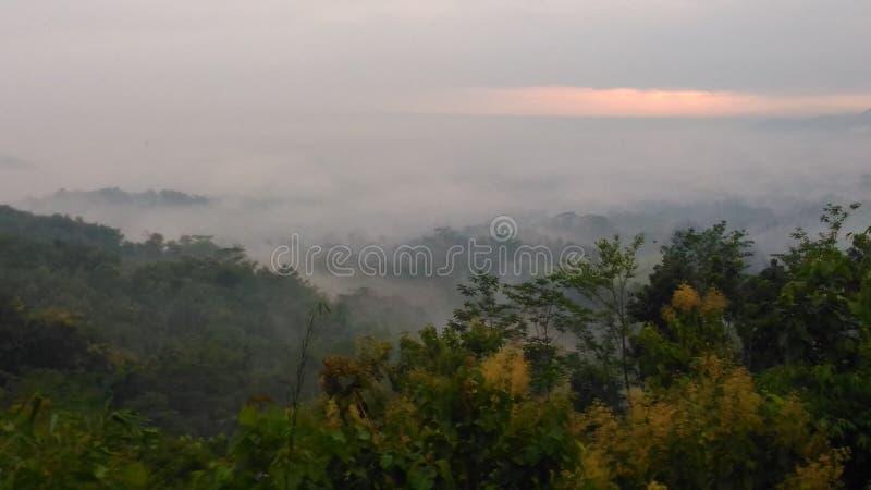 自然有雾在早晨 库存照片