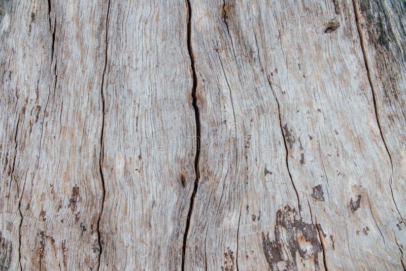 自然木吠声样式或纹理 老概略的树褐色自然木抽象背景 免版税库存照片