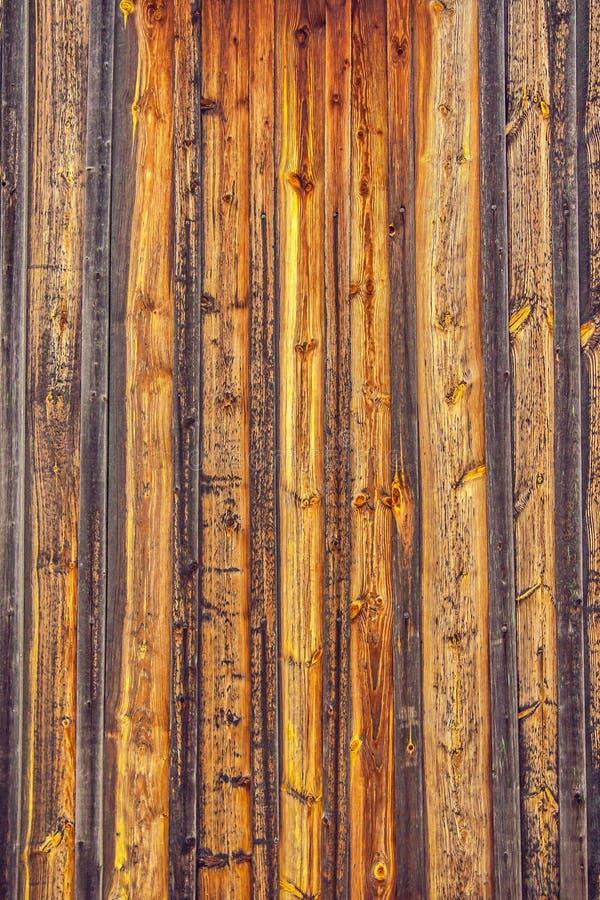 自然本底老杉木的纹理图象上 库存图片