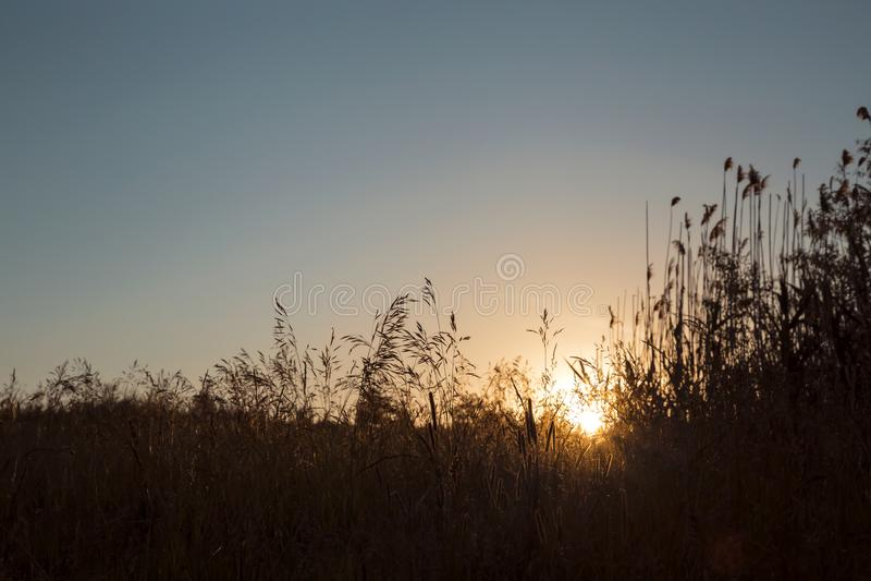 自然本底 黎明和天空蔚蓝在领域 太阳升起在草背景的天际  免版税库存照片