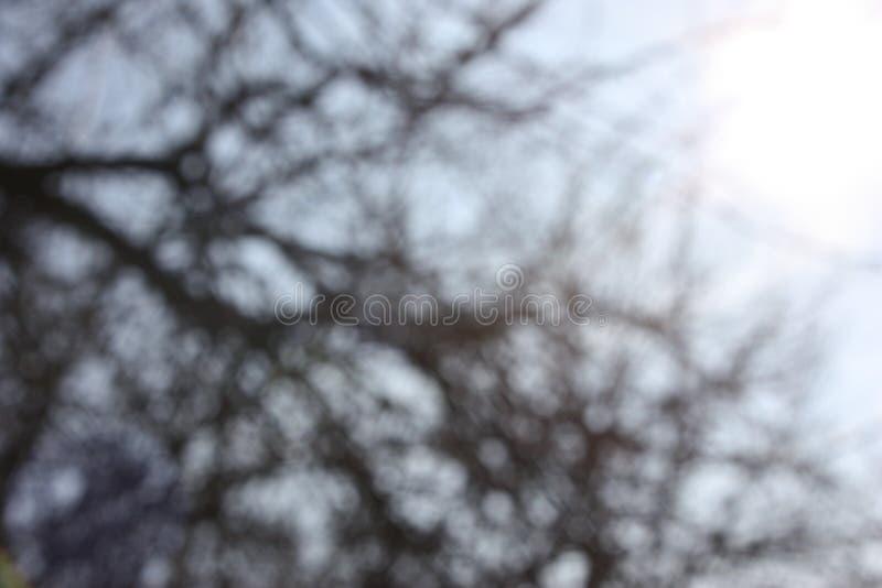自然树枝抽象灰色背景背景和墙纸的 免版税库存照片