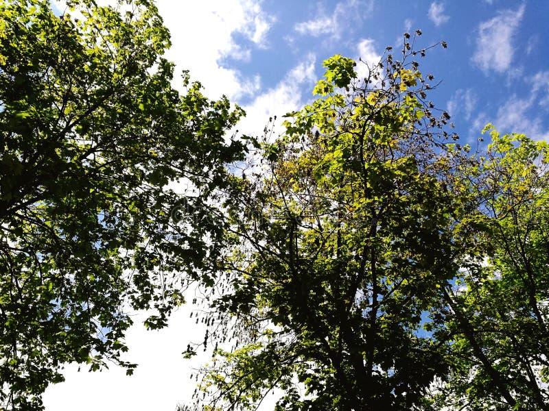自然树覆盖天空 免版税库存图片