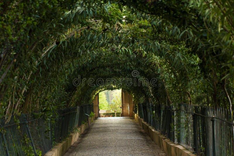 自然树隧道 免版税库存照片