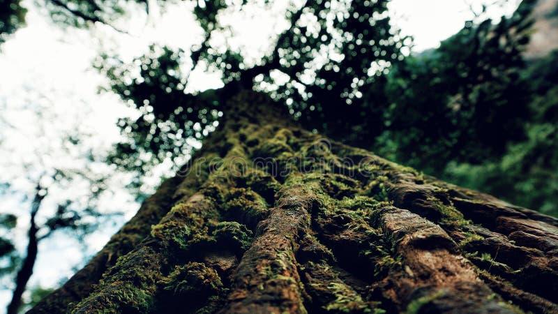 自然树  免版税库存照片