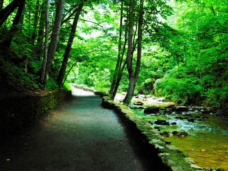 自然桥梁道路 库存照片