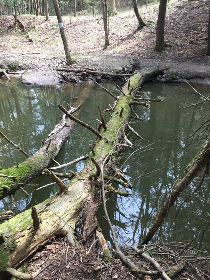 自然桥梁 免版税库存照片