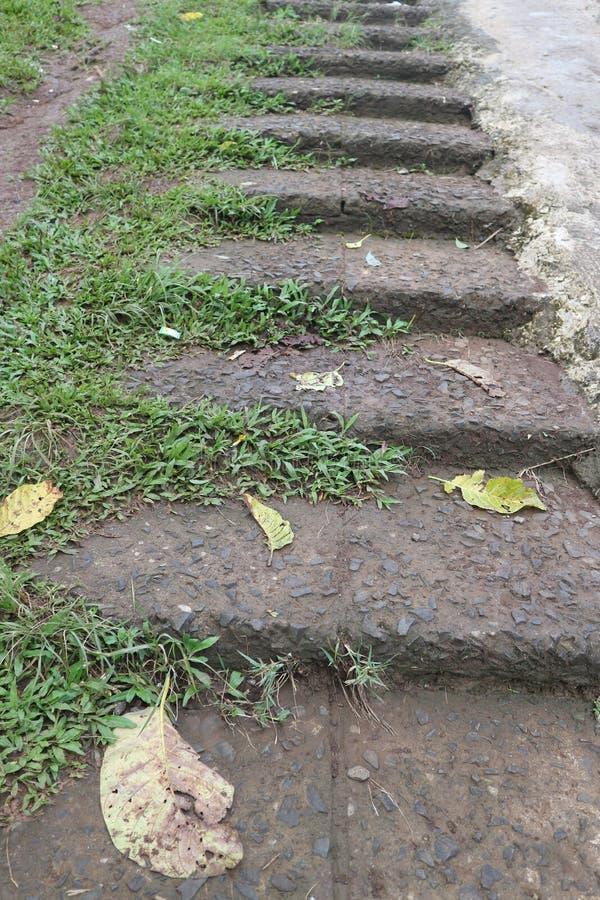 自然梯子 免版税库存照片