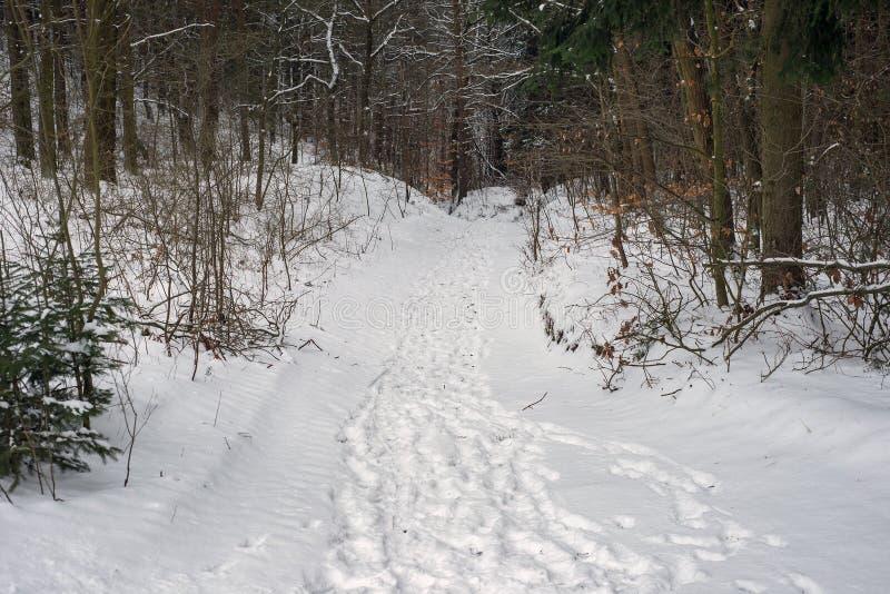 自然森林冬天道路小径足迹跟踪雪 免版税库存照片