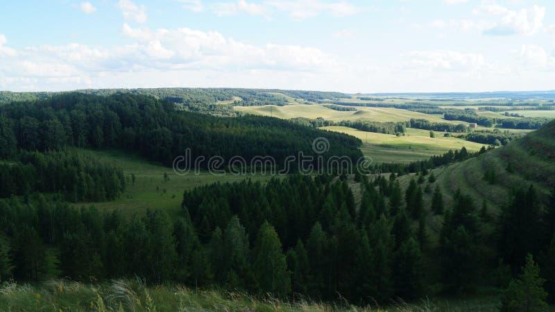 自然森林草覆盖山生气勃勃 免版税图库摄影