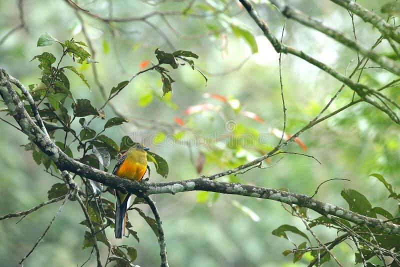 自然森林马来西亚 库存图片