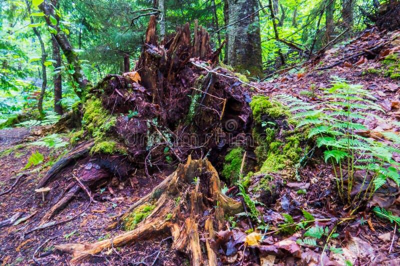 自然植物和一个分解的树干 库存照片