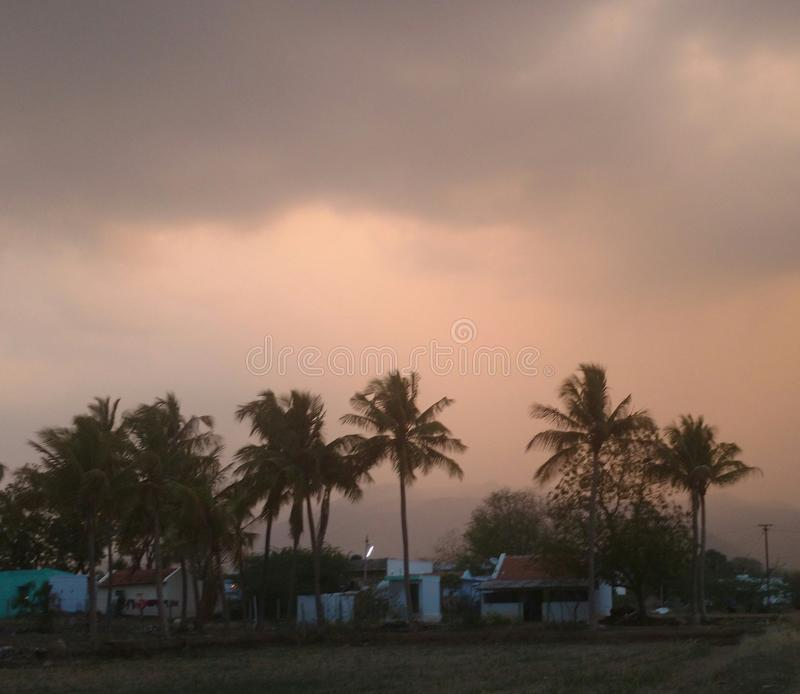 自然椰子树 免版税库存图片