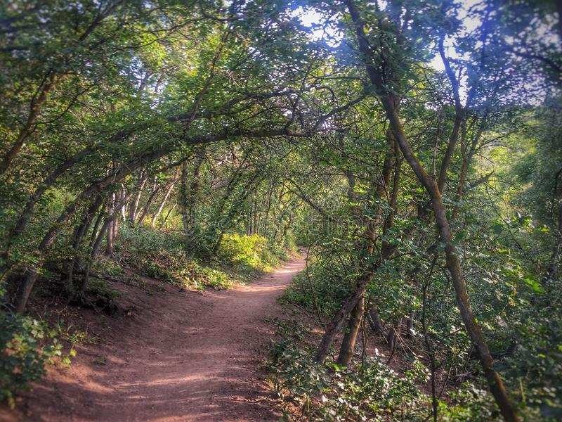 自然步行 免版税库存照片