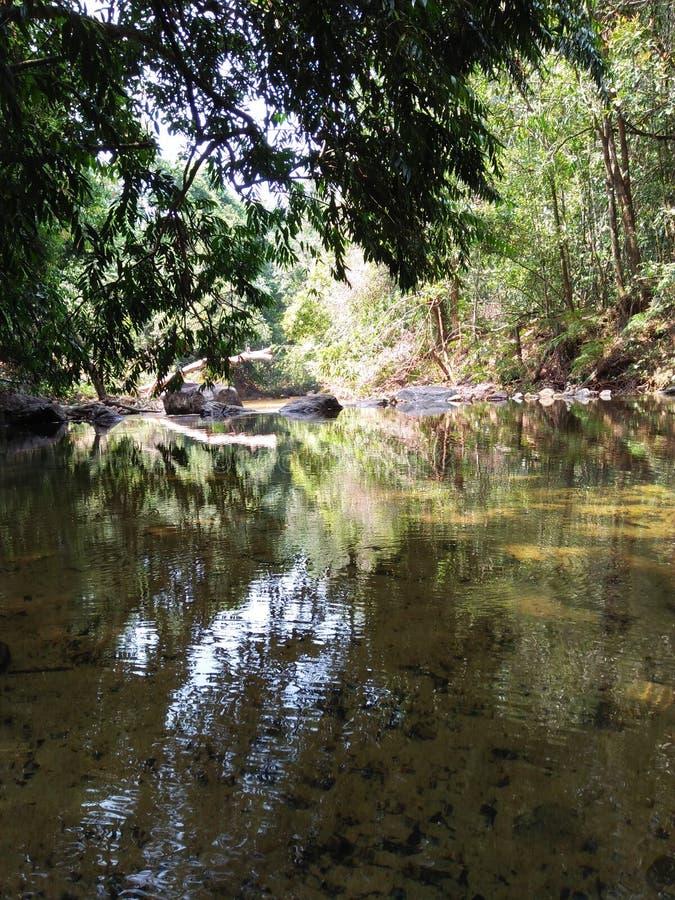 自然水池在森林里 库存图片