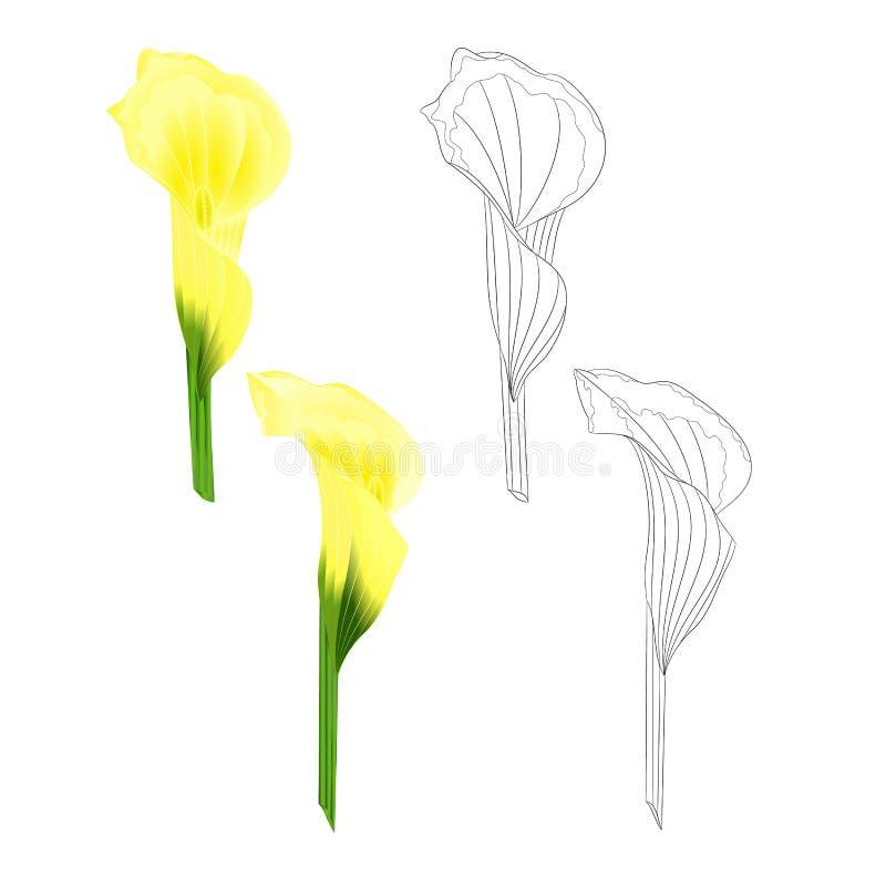 自然水芋百合黄色花草本四季不断的园林植物和概述在白色背景葡萄酒传染媒介的集合 库存例证