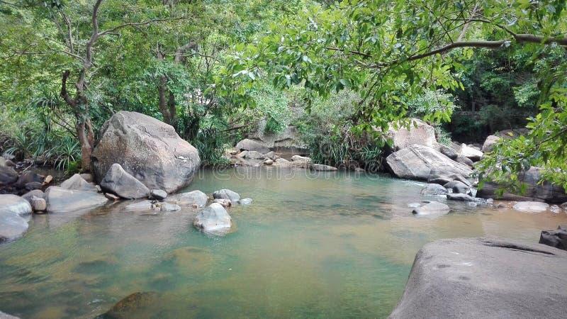 自然池 图库摄影