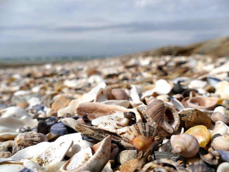 自然沙子和壳有defocused背景 免版税库存图片