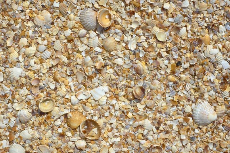 自然沙子和壳背景 免版税库存图片