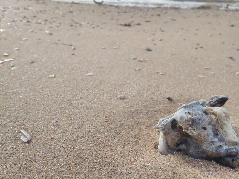 自然沙子海滩 免版税库存照片