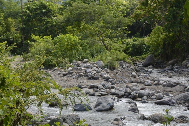 自然沿Napan河的增长的植被位于Sitio Napan, Barangay戈马, Digos市,南达沃省,菲律宾 免版税库存照片
