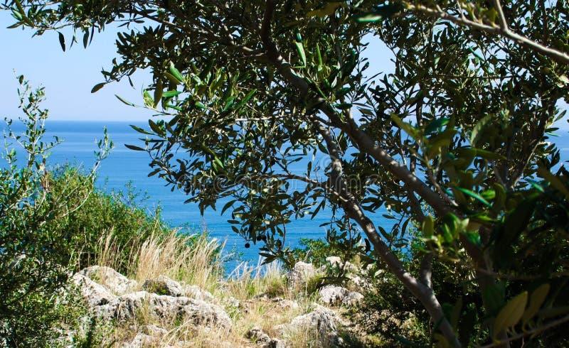 自然海狂放的风景储备 库存照片