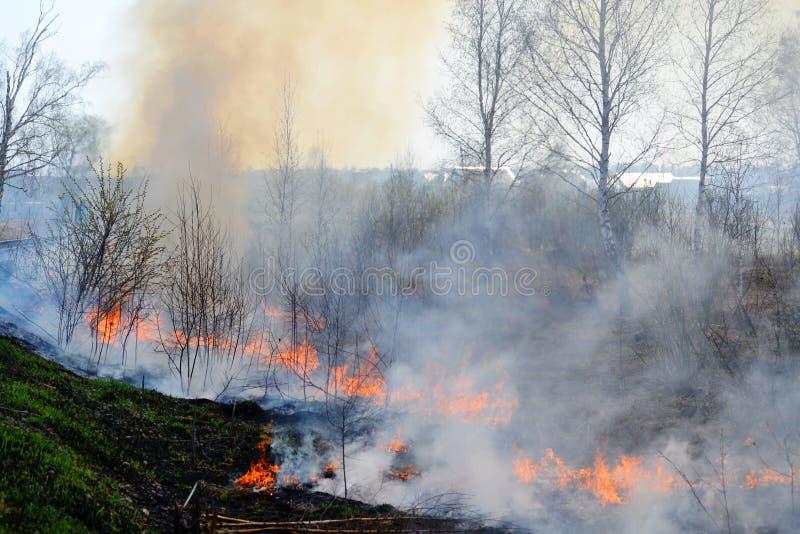 自然火在春天之前 库存图片