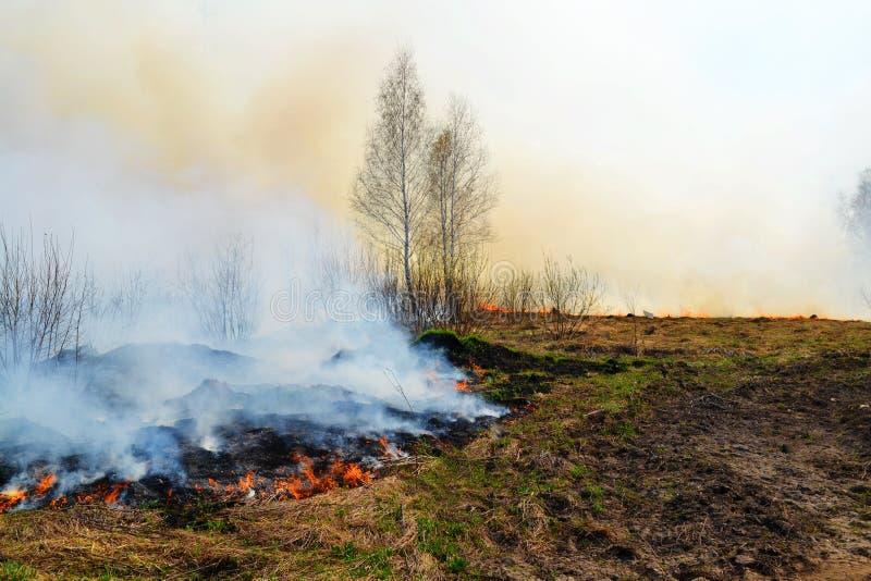 自然火在春天之前 库存照片