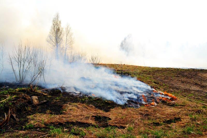 自然火在春天之前 免版税图库摄影