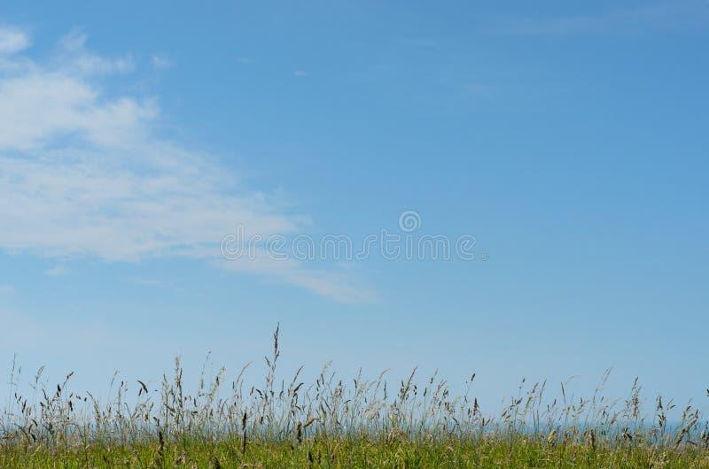 自然狂放的象草的有明亮的蓝天的小山顶俯视的海 免版税库存照片