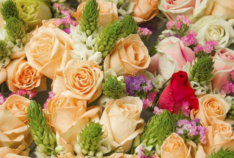 自然玫瑰背景 免版税库存照片