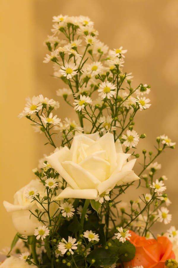 自然玫瑰花背景 免版税库存图片