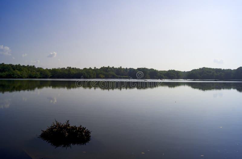 自然生态系在沿海水域 免版税库存图片