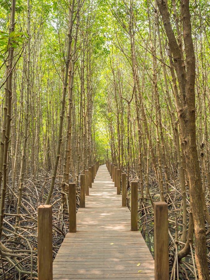 自然痕迹在美洲红树国家公园,泰国湾 图库摄影