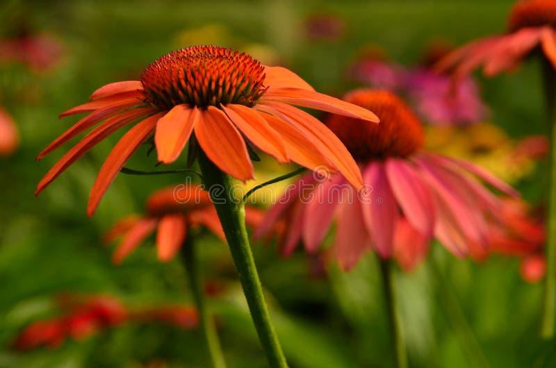 自然的完善的颜色 免版税库存照片