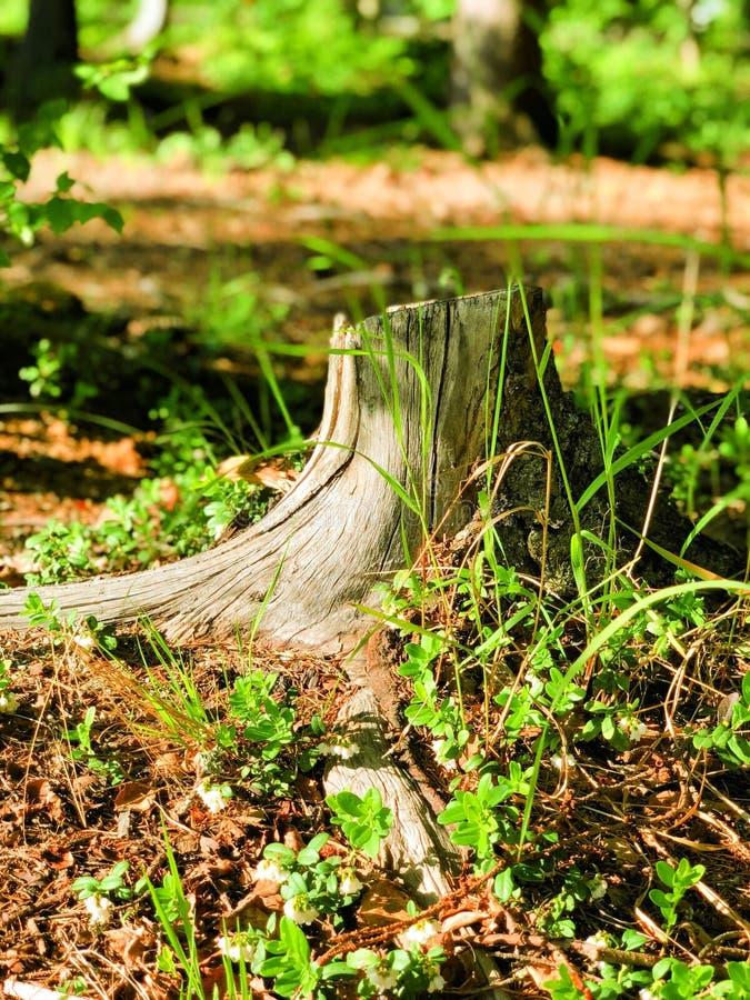 自然的森林 库存照片