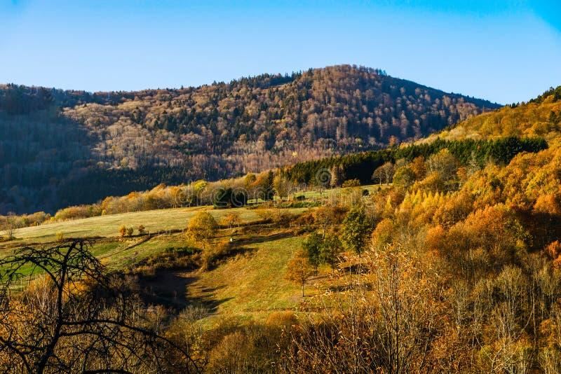 自然的秋天颜色在阿尔萨斯、五颜六色的叶子和fgorests的 库存图片