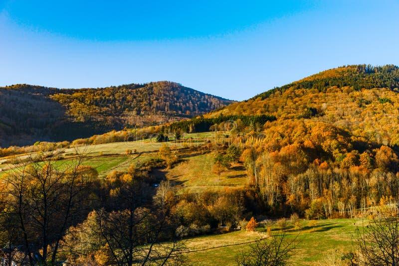 自然的秋天颜色在阿尔萨斯、五颜六色的叶子和fgorests的 免版税图库摄影